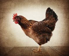 Petunia the Chicken Photo Print, Kitchen decorating ideas, Farm Animals, Chicken One Photo Print