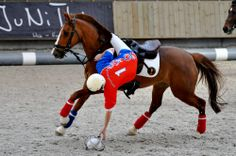 Discover Horse-Ball or Horse Quidditch, as CNN dubbed it. This rising star of equestrian disciplines begins its exhibition tournament at the 2014 World Games Tomorrow, Horse Racing Bet, All About Horses, Horse Quotes, Normandy, Horse Riding, Equestrian, Volleyball, Basketball