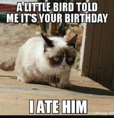 Grumpy cat funny, grumpy cat humor, grumpy cat meme, sarcastic funny, grouchy cat …For more funny quotes and hilarious images visit www. Grumpy Cat Quotes, Funny Grumpy Cat Memes, Funny Animal Jokes, Animal Memes, Funny Cats, Funny Animals, Grumpy Kitty, Funny Horses, Kitty Cats