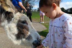 tamar-valley-donkey-park-feeding