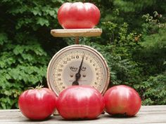 Heirloom Beefsteak Tomato Seeds Easy To Grow Up to 1 par CheapSeeds, $1.99