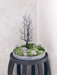 This site has a lot of interesting mini plant arrangements. For the home or garden! :) Indoor plants, cactus, and house plants. All the green and growing potted plants. Succulents In Containers, Cacti And Succulents, Moss Garden, Garden Plants, Indoor Garden, Indoor Plants, Diy Garden, Decoration Plante, Bonsai Art