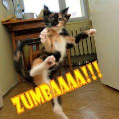 zumba cat!