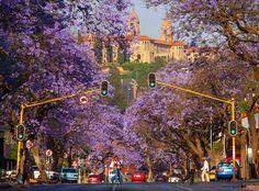 Stunning Pretoria ...The Union Buildings the Jacaranda Trees Oct 2015