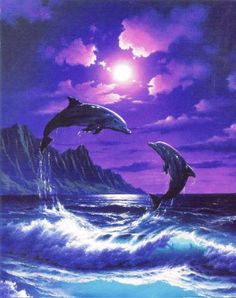δελφινια φωτογραφιες - Αναζήτηση Google