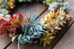 DIY: Simple & Stunning Living Succulent Wreath   Prudent Baby