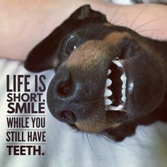 Oh heck ! Smile even after every tooth is gone. Our Dogs sure smile after they loose a few.