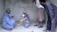 """""""O Grito do Bicho"""": Justiça para cão amarrado em uma corda e espancado..."""