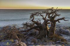 Kubu Island, or Lekhubu as it is locally known, Botswana. Looks so lonely.