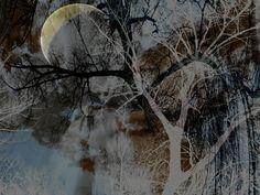 Neu in meiner Galerie bei OhMyPrints: Magischer Wald