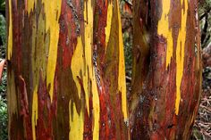 Snow gum bark by Roger T Wong