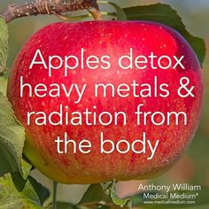 Apples detox heavy metals & radiation from the body🍎 Learn more about the hidden healing powers of fruits & vegetables in my new book Life-… Health Facts, Health And Nutrition, Health Tips, Health And Wellness, Health And Beauty, Health Fitness, Fitness Diet, Natural Health Remedies, Natural Cures
