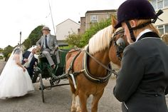 Wedding- horse and carriage