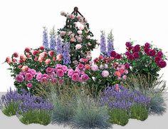 1. Роза Jubilee Celebration- — 2 шт. 2. Princess Alexandra Of of Kent — -2 шт. 3. Роза A Shropshire Lad — -1 шт. 4. Роза Christopher Marlowe — -1 шт. 5. Роза William Shakespeare 2000 — - 1 шт. 6. Дельфиниум гибридный — -3 шт. 7. Лаванда — -3 шт. 8. Овсяница сизая — – 3шт.