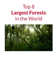 Top 8 Largest Forests in the World