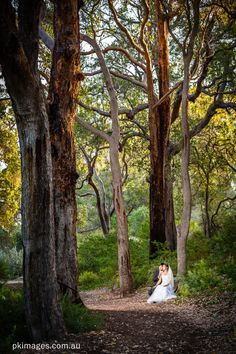 A portrait of a wedding couple having a rest on a park bench.  The couple is surrounded by very tall trees in the Kings Park WAAustralia
