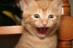 20 Funny Shocked Cat Memes