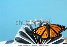 Monarch butterfly with wings open sitting on curled pages of a book with a blue background - stock photo