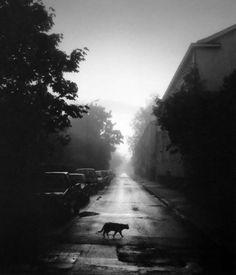 Pentti Sammallahti, Helsinki, Finland (Cat Crossing the Street), 2000