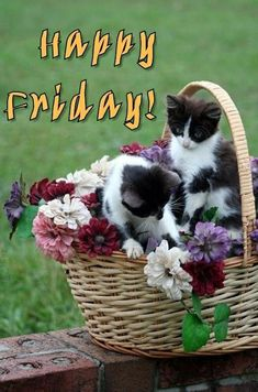 Cute Kittens, Kittens And Puppies, Fluffy Kittens, Pretty Cats, Beautiful Cats, Animals Beautiful, Crazy Cat Lady, Crazy Cats, Baby Animals