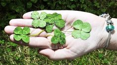 Top những câu chúc may mắn hay và ý nghĩa nhất quả đất - http://www.blogtamtrang.vn/top-nhung-cau-chuc-may-man-hay-va-y-nghia-nhat-qua-dat/