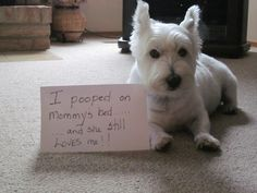 Submission from Remy (Additionally, y'all know how I love Dog Shaming, right?)