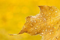 Photographing Autumn in Ohio,  photographybyvarina.com