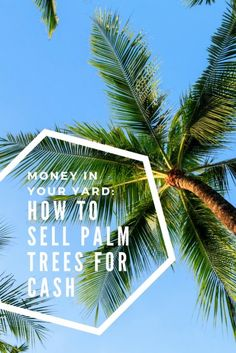 Money in Your Yard: How to Sell Palm Trees For Cash | How To Make Extra Income | Additional Income Ideas | Frugal Living Hacks