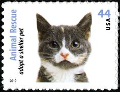 US postage cat stamp - 2010 Commemorative Stamps, Grey Kitten, Postage Stamp Art, Gatos Cats, Matou, Vintage Cat, Tampons, Fauna, Stamp Collecting