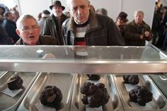 At 600 euros per kilo, the biggest black truffles at the annual truffle fair in Sarrión earn the respect of hungry onlookers. While tasting ...