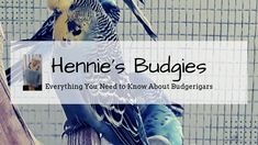 the blog Show Budgies, Book Recommendations, This Or That Questions, Books, Libros, Book, Book Illustrations, Libri