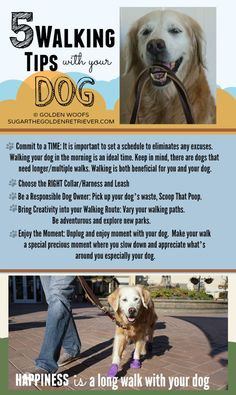 Infographic: 5 Walking Tips With Your Dog