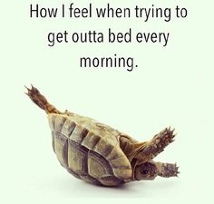 More like off the couch, getting out of the car, and getting out of bed. ..