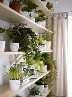 If I had the space inside, I would really love to do this indoor garden!