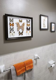 a neutral color with strong accent colors, a bright orange and blue.  The accents were inspired by the butterfly collection, especially the orange and light blue butterfly