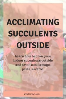 Acclimating Succulents Outside. Learn to do properly transition your succulents outside this summer! Avoid sunburns, pests, and rot! Types Of Succulents, Succulents In Containers, Planting Succulents, Succulent Care, Succulent Terrarium, Outside Planters, Propagating Succulents, Diy Garden, Cactus Flower
