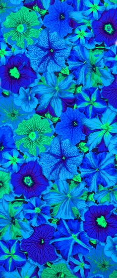 Petunias - by Philip Jacobs for Rowan. Blue green