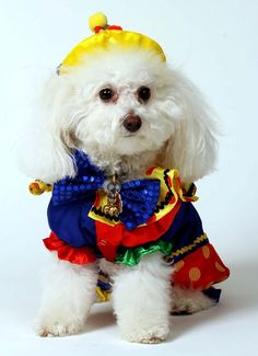 When ever you may be finished looking at this, try examining a huge inquiry each of us should really be asking our selves. #funny #pet #Costumes http://bestbinauralbeatsreview.wordpress.com/