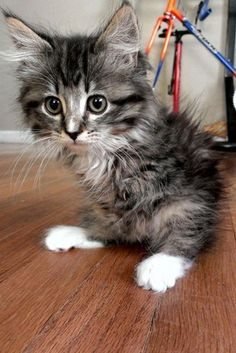 Pancake The Kitten Proves Cats Don't Need 4 Legs To Have A Good Time