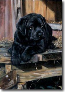 black labador retriever puppies