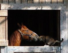 """""""Does your horse have a barn cat buddy? Via Pinterest"""""""