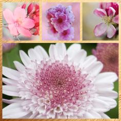 Collage I made via pic stitch of pink flowers