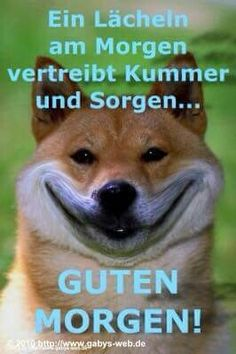 bilder schönen nachmittag You are in the right place about GIF kpop Here we offer you the most beautiful pictures about the jungkook GIF you are looking for. When you examine the bilde Fun Snacks For Kids, Dog Snacks, Brigitte Grey, Good Night, Good Morning, Amazon Advertising, Halloween Inspo, Kids Videos, Shiba Inu