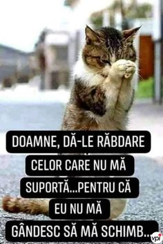 Funny Jockes, Funny Cats, Funny Animals, Funny Quotes, Cute Animals, Morning Greetings Quotes, Good Jokes, Strong Girls, Anime Ships