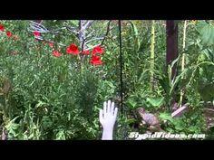 Slippery Squirrel - Birdfeeder Vaseline Trick - YouTube