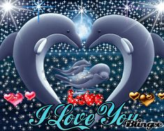 Family of Dolphins In Love