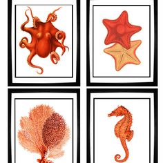 Red Orange Coral Sea Fan Octopus Starfish Seahorse Vintage Style Nautical Art Print Set of 4 Natural History Beach House Decor Beach Living Room, Beach Room, Beach Wall Art, Ocean Home Decor, Beach House Decor, Coastal Decor, Beach Condo, Coral Print, Nautical Home