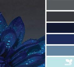 { dew blue } image via: @marinajades Design Seeds, Colour Pallette, Color Palate, Colour Schemes, Color Combos, Blue Accent Walls, Blue Accents, Accent Colors For Gray, Gray Color