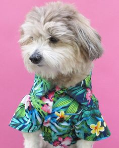 Should dogs wear clothes? Insight on the controversial topic.