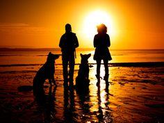 Best pet friendly beaches!